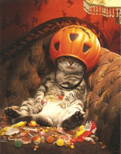 how did your halloween candy eating go?